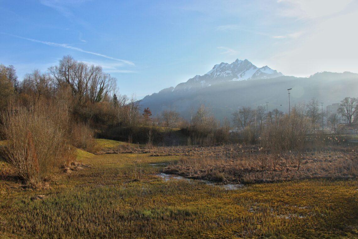 Im Naturerlebnisgebiet Allmend in Luzern hat es viel Sumpfgebiet für Frösche und Amphibien.