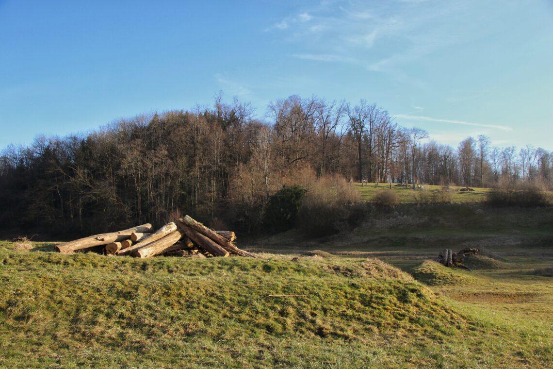 Diese Holzhaufen im Naturerlebnisgebiet Allmend in Luzern dienen als Nistplätze für Tiere.