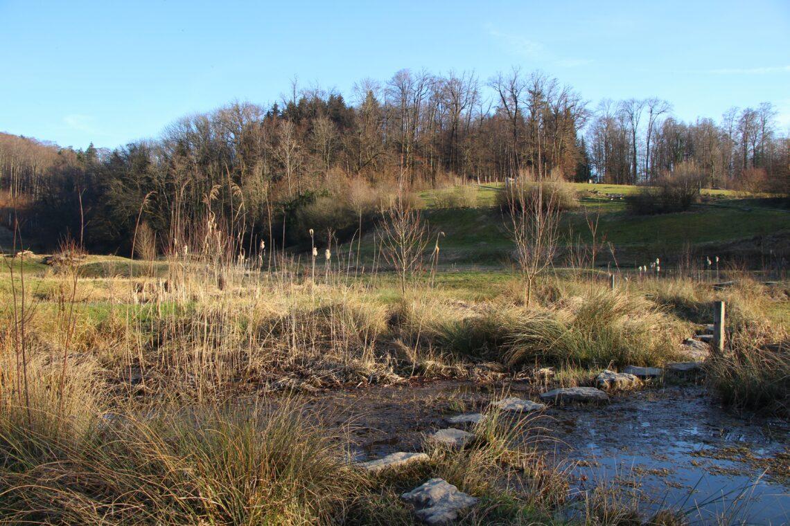Ein Teich im Naturerlebnisgebiet Allmend in Luzern.